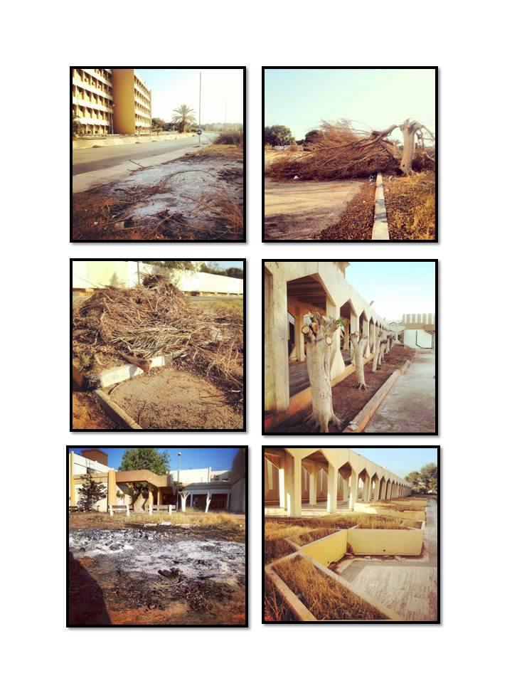 أشجار الكليات الطبية جامعة بنغازي